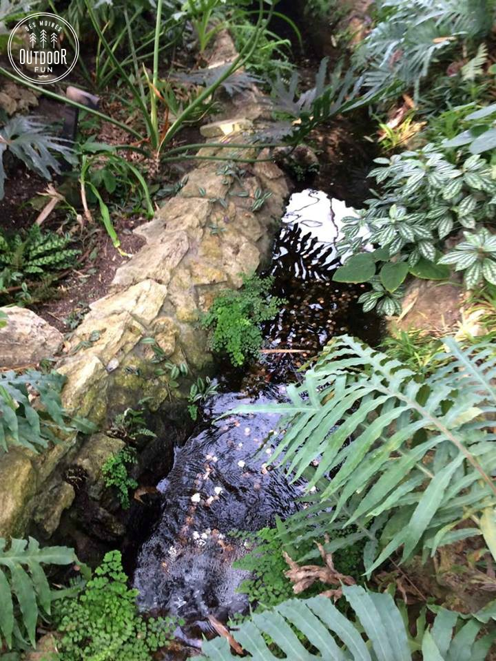 Greater Des Moines Botanical Garden iowa (2)