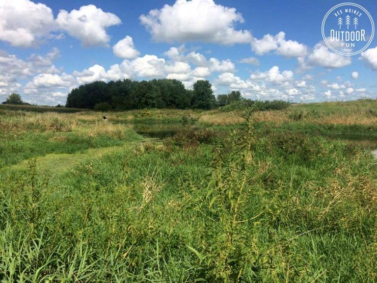 engeldinger marsh (3)