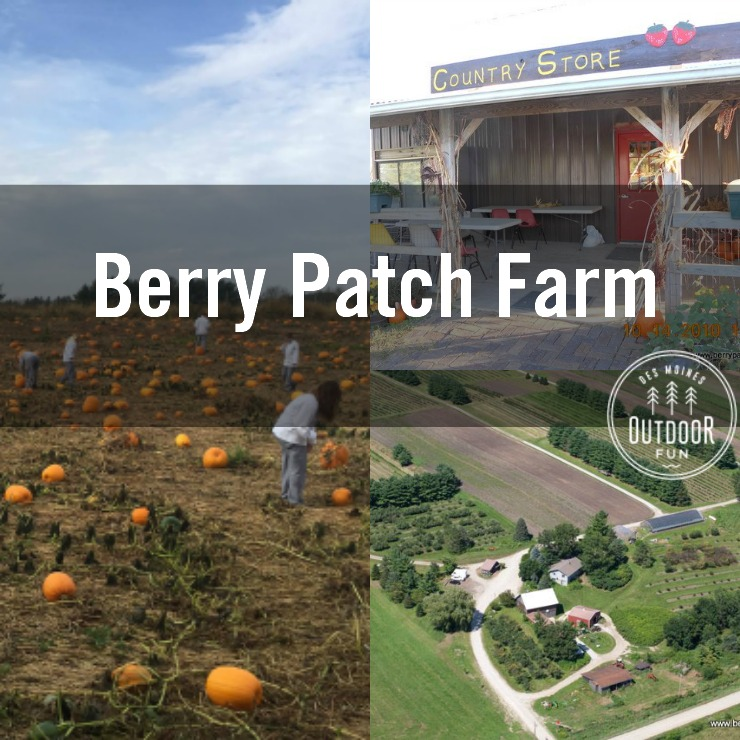 [Photos courtesy of Berry Patch Farms]