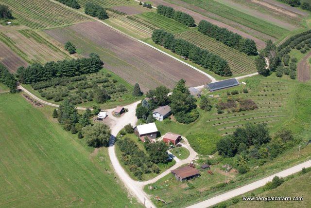 [Photos courtesy of Berry Patch Farms]