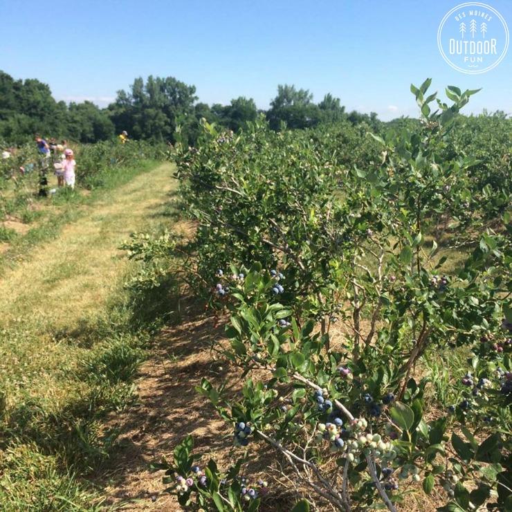 berry patch farms nevada iowa (2)