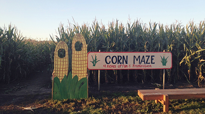 center-grove-orchard-des-moines-iowa-pumpkin-patch-3