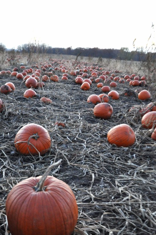 center-grove-orchard-des-moines-iowa-pumpkin-patch-6