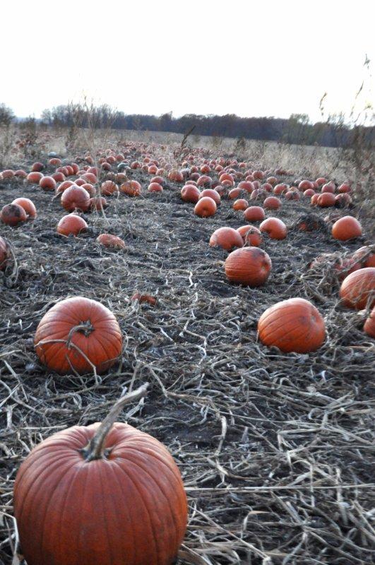 center-grove-orchard-des-moines-iowa-pumpkin-patch-6