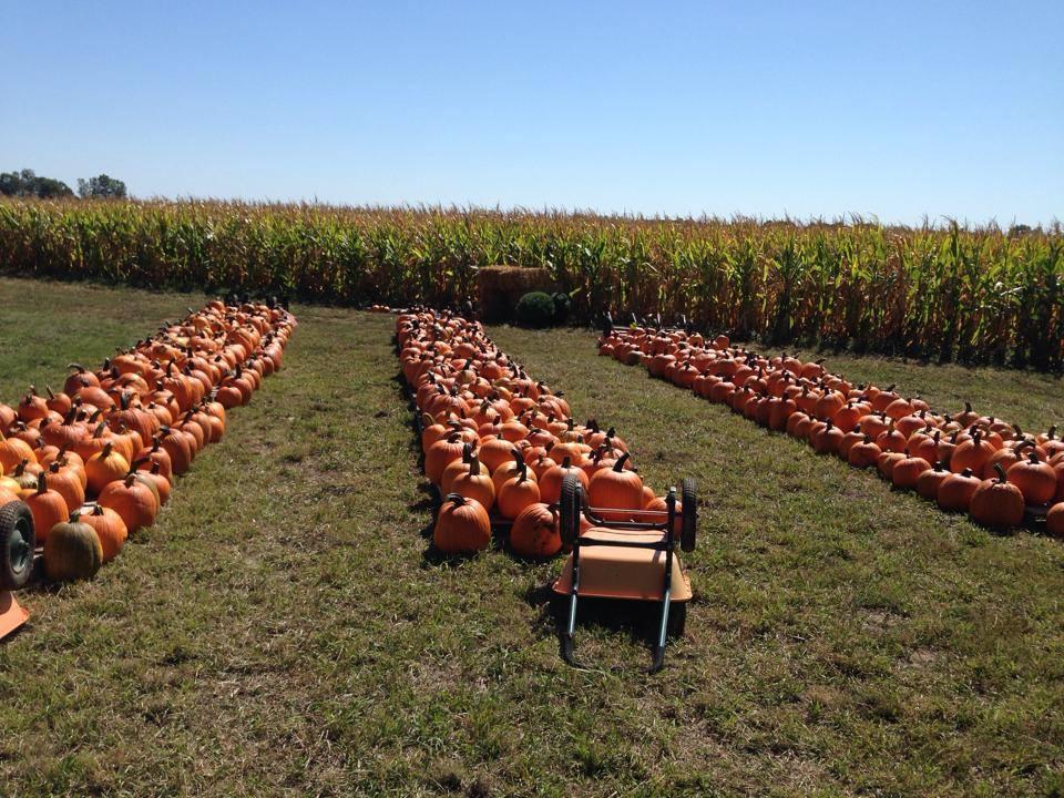 [photos courtesy of The Pumpkin Ranch]