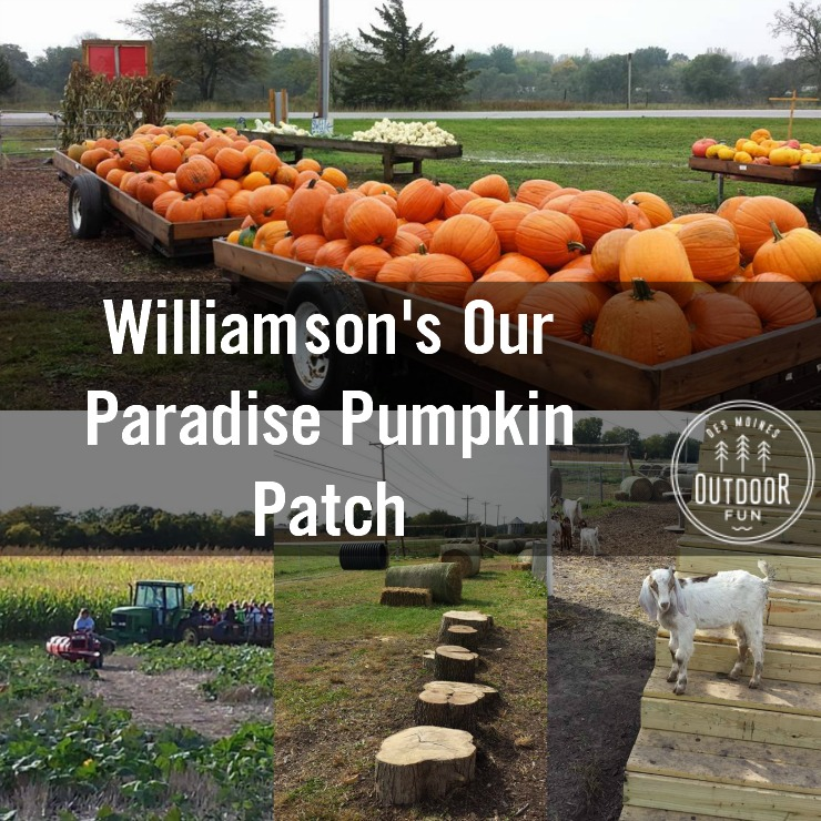 [Photos Courtesy Of Williamson's Our Paradise Pumpkin Patch]