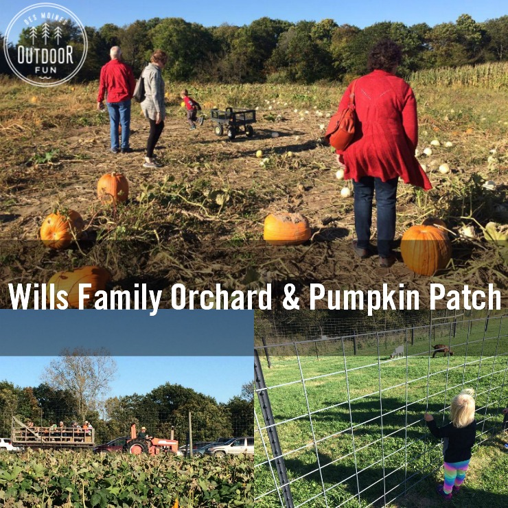 Wills Orchard Wills Pumpkin Patch