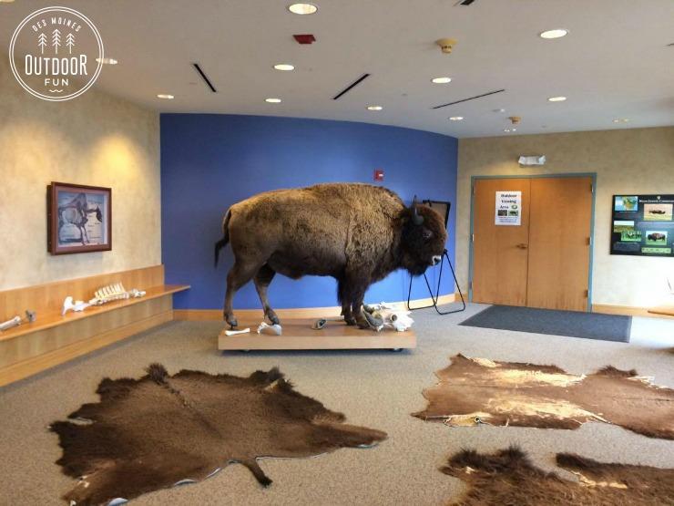 des moines buffalo