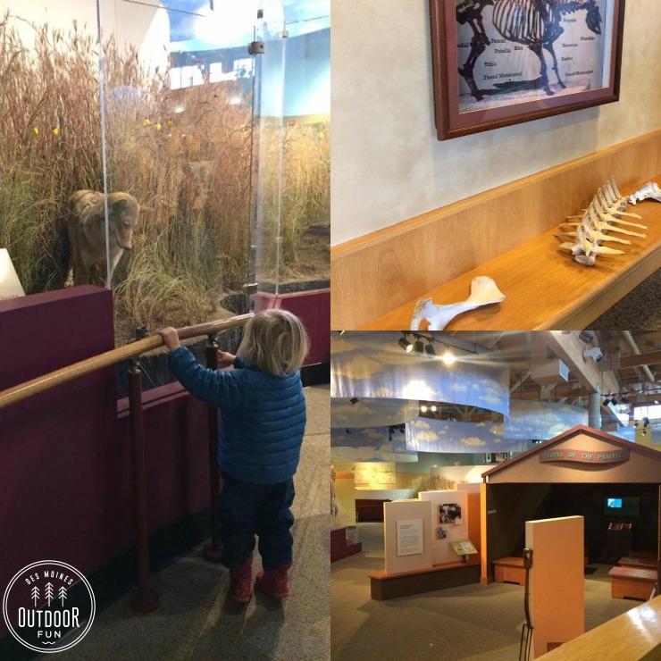 des moines indoor nature museum