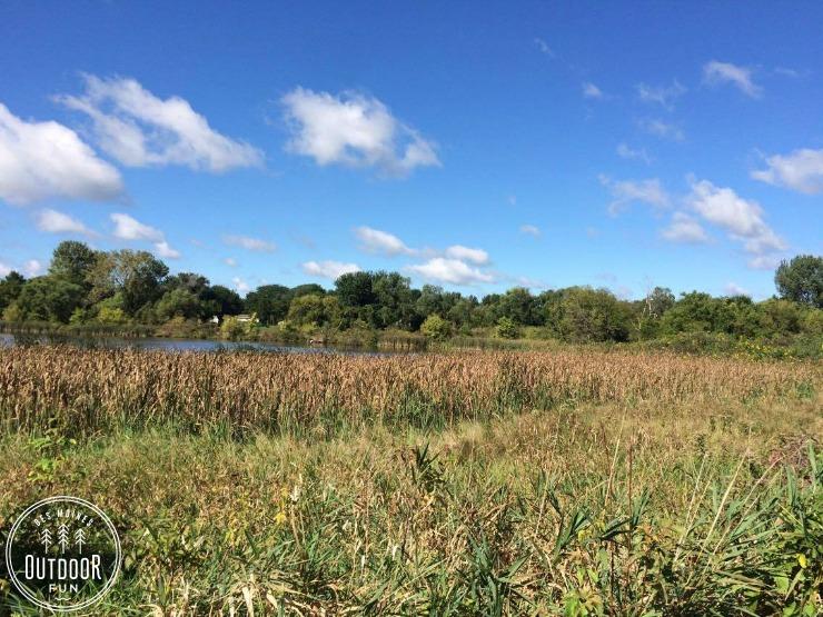carney marsh des moines ankeny iowa (1)