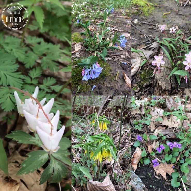 goeldner woods wildflowers