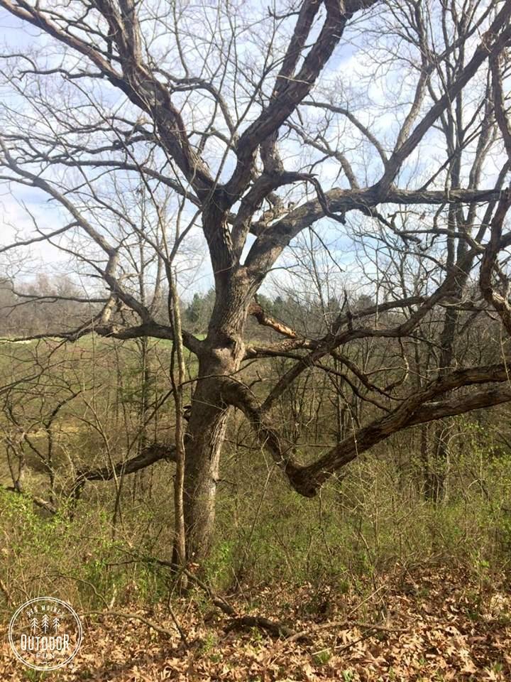 yellow banks park pleasant hill iowa (9)