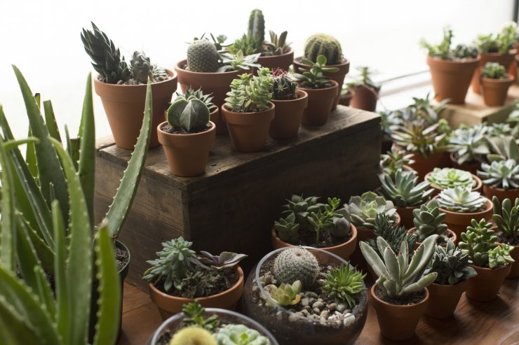 where to buy succulents in des moines, iowa