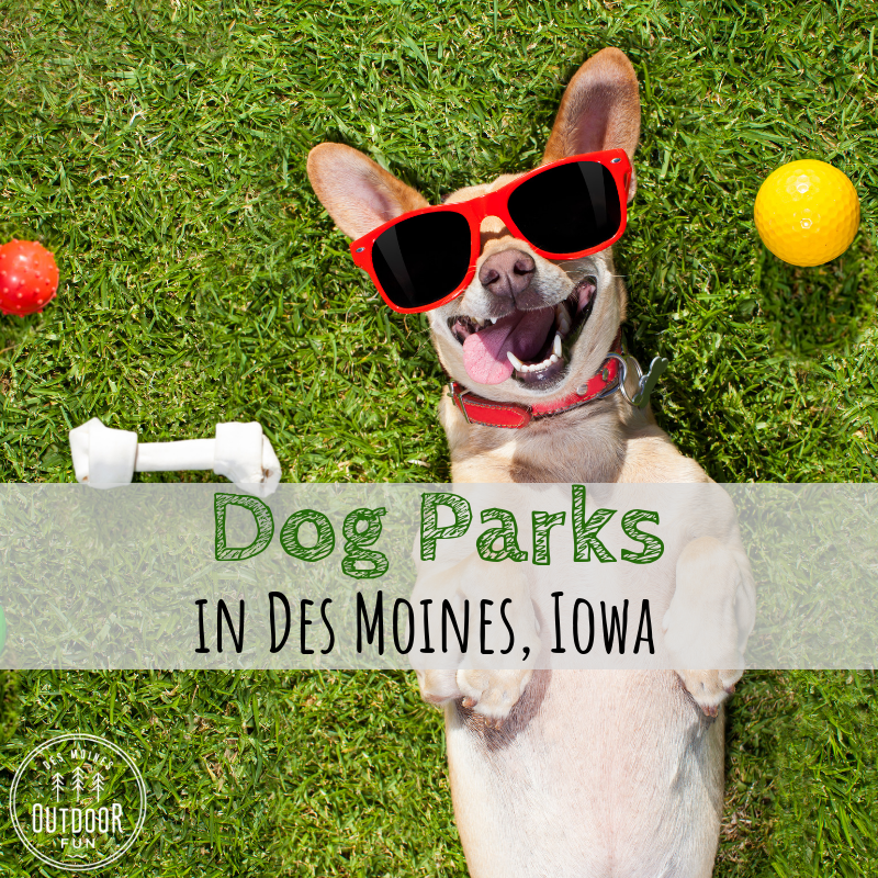 Dog Parks, Dog, Dogs, Des Moines, Iowa